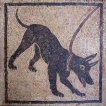 Mosaico raffigurante un cagnolino al guinzaglio all'interno della Casa di Orfeo (Pompei)
