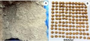 A sinistra la struttura di combustione ritrovata in Spagna, a destra i gusci di lumache