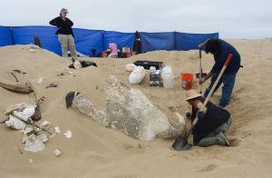 Ritrovamento della sfinge di gesso sulla spiaggia californiana