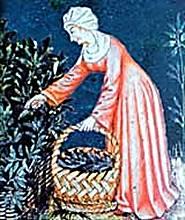 Una donna nel Medioevo raccoglie erbe officinali