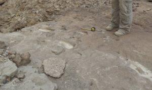 Le impronte di Homo erectus scoperte di recente in Eritrea