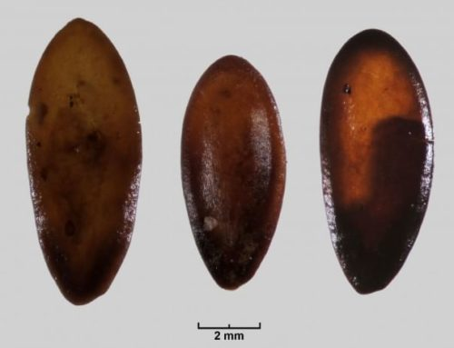 Trovati in Sardegna i Semi di Melone più Antichi del Mediterraneo